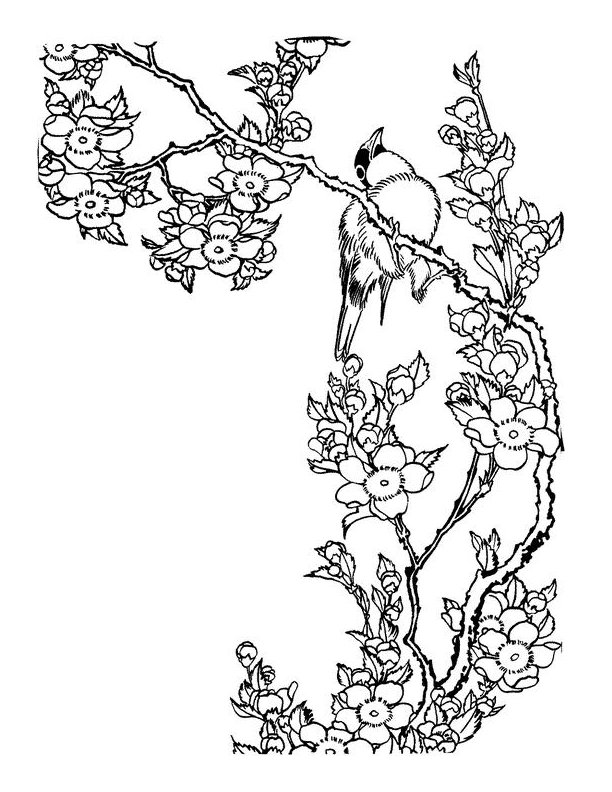 612x792 Cherry Blossom Tree Drawing To Color1 ~~luhur Hati~~