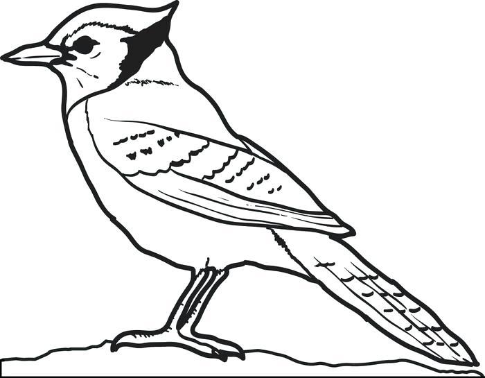 Blue Bird Drawing At Getdrawings Free Download