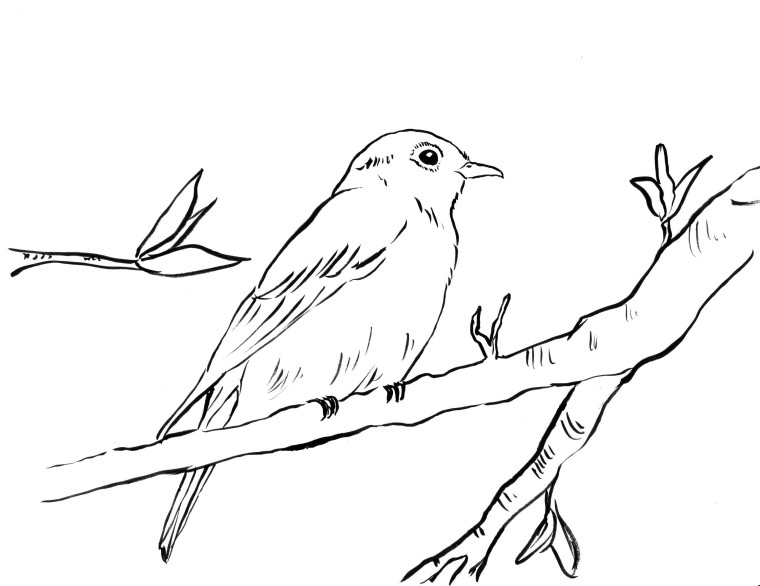 760x586 Bluebird Coloring Page