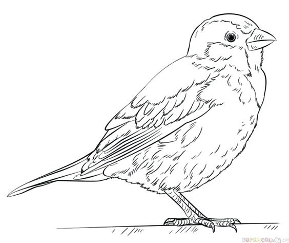 564x473 Draw Coloring Pages Bluebird Coloring Page Draw Coloring To Cure