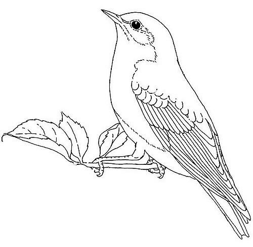 500x487 Bird Illustrations