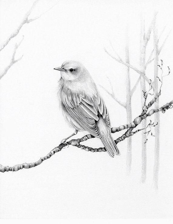 570x735 Pencil Drawing Pencil Drawing Drawings, Bird