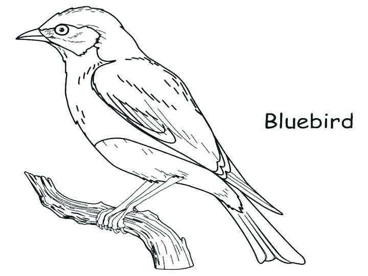 720x540 Robin Animal Coloring Pages Drawing Robin Bird Coloring Page