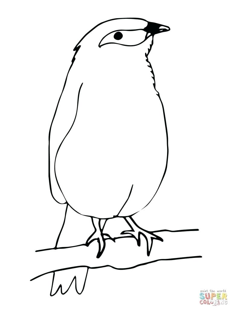 768x1024 Coloring Blue Bird Coloring Pages