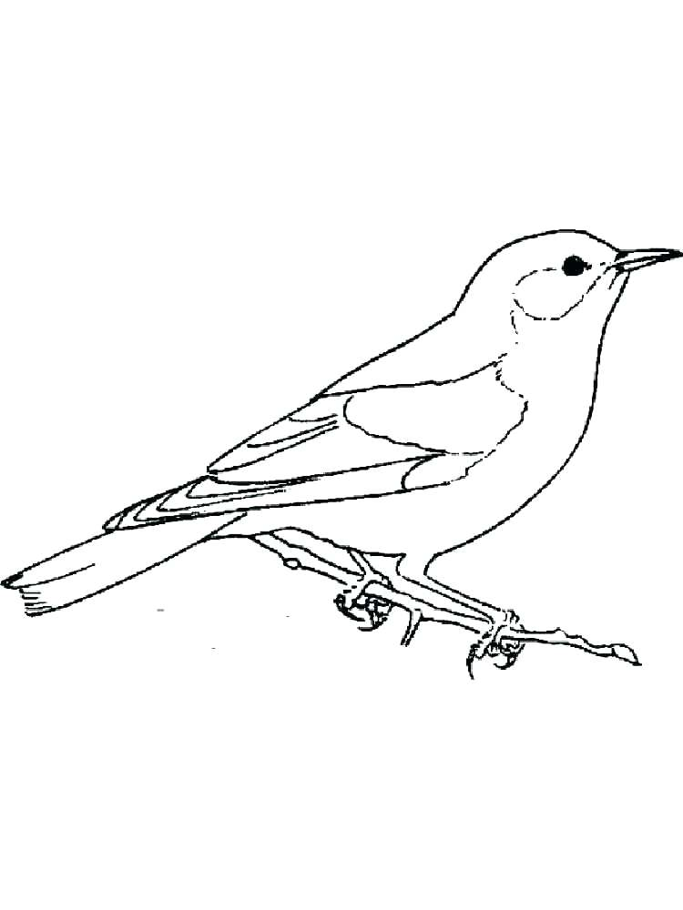 750x1000 Blue Bird Coloring Page Bluebird Birds Coloring Pages 2 Blue Angry