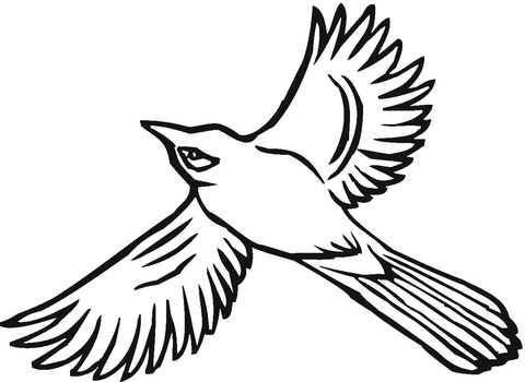 480x350 Flying Jay Coloring Page Free Printable Coloring Pages