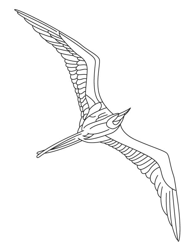 630x810 Flying Seabird Coloring Page Download Free Flying Seabird