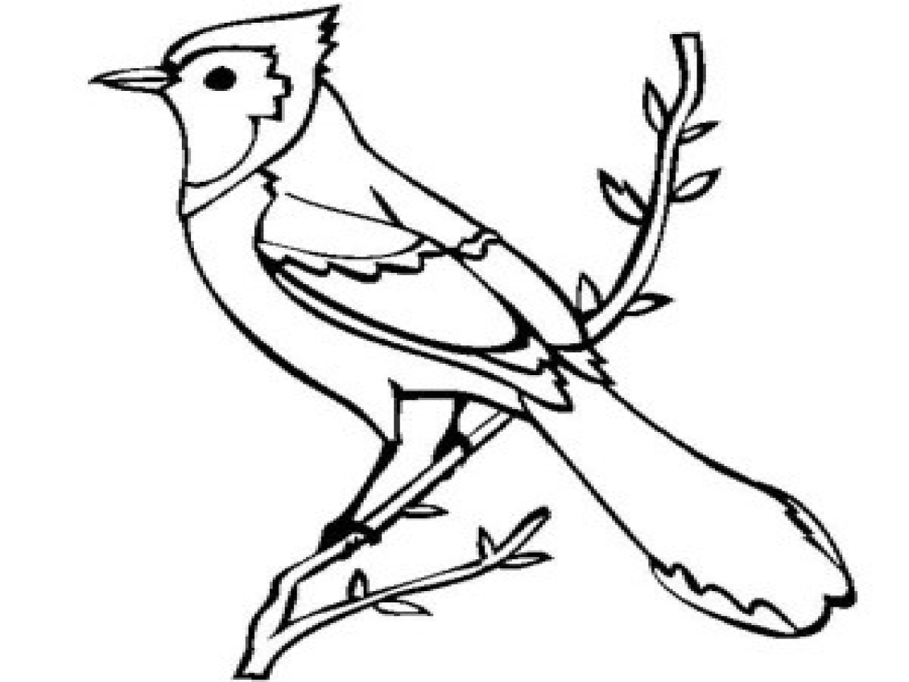 1280x960 Jay Bird Coloring Page Flying Blue Jay Coloring Pages, Blue Jay