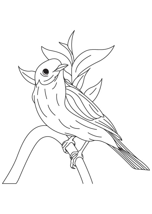 613x860 Western Bluebird Coloring Page Download Free Western Bluebird