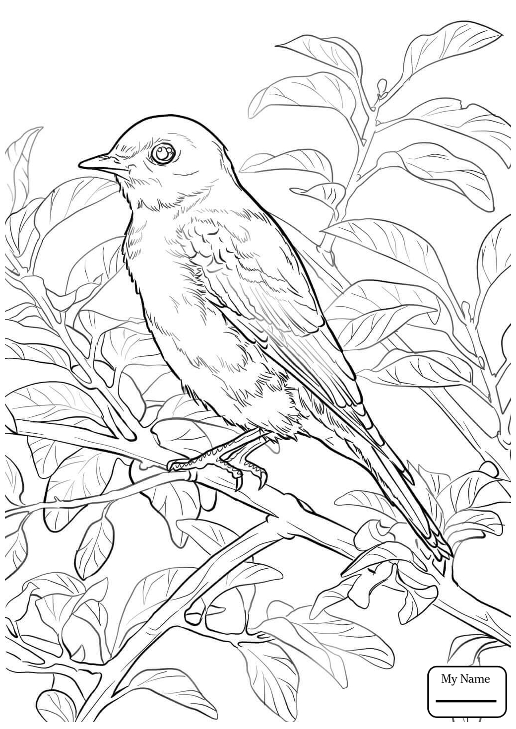 1040x1469 Coloring Pages For Kids Birds Blue Bird Flying Bluebird
