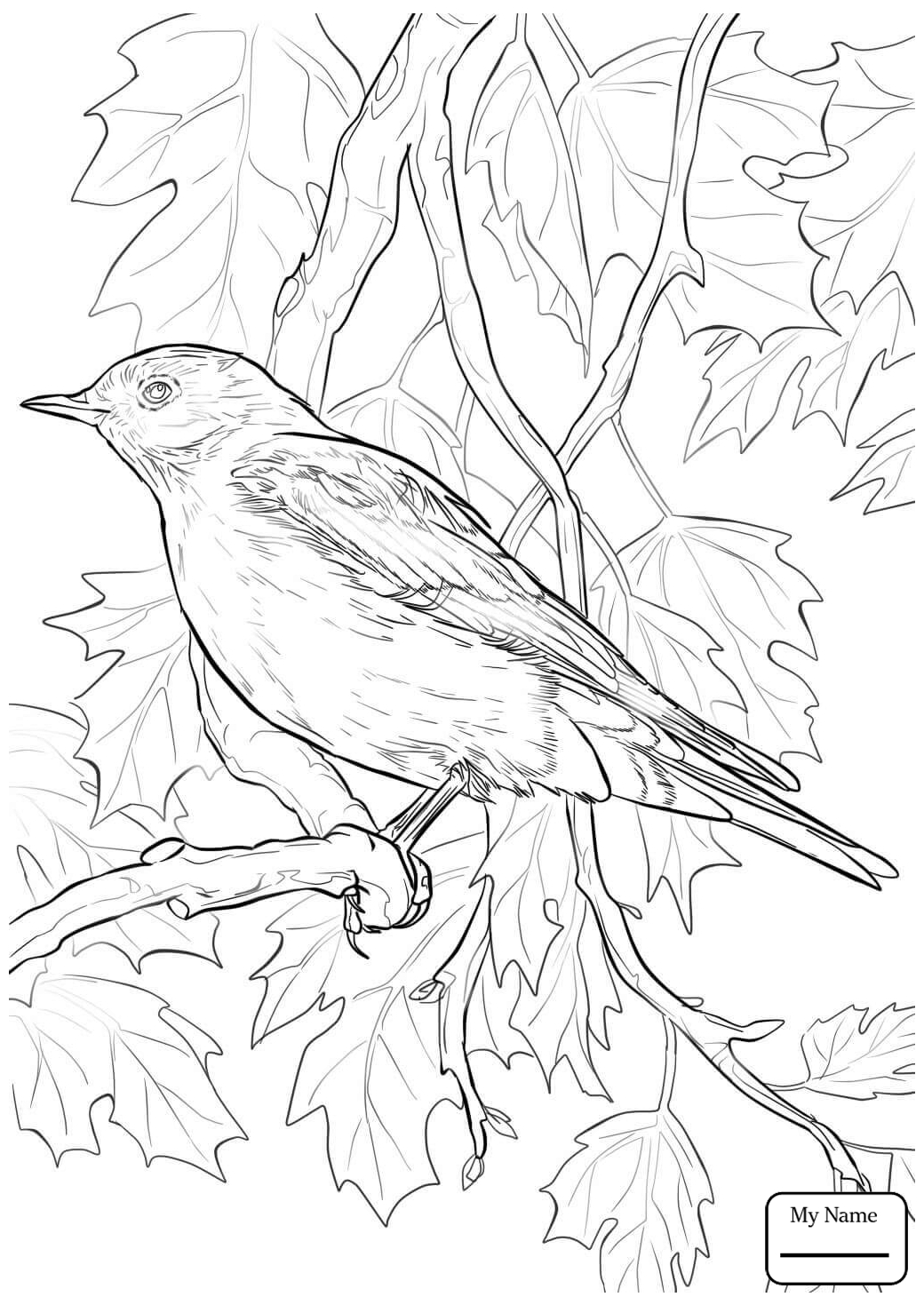 1040x1469 Coloring Pages For Kids Bluebird Birds Blue Bird Flying