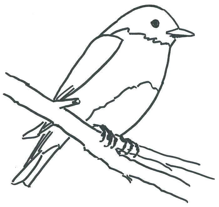 700x661 Bluebird Coloring Page Mountain Bluebird Coloring Sheet View