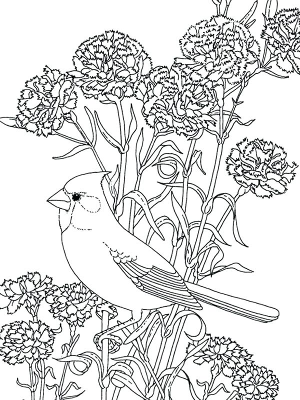 600x800 Bluebonnet Flower Coloring Page Flower Bird Coloring Pages