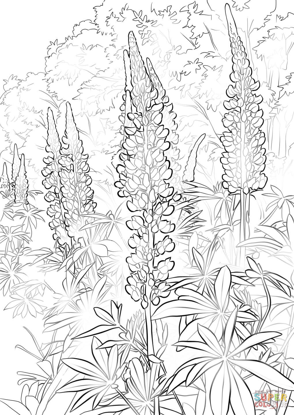 1020x1440 Bluebonnet Flower Coloring Page Free Printable Coloring Pages