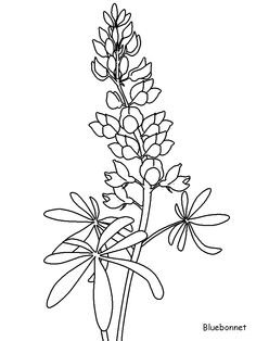 236x314 Texas Bluebonnet Flower Drawings Projects To Try