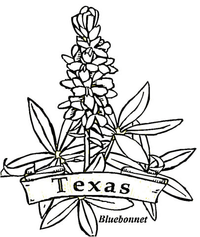 406x480 Texas Flowers Coloring Page Free Printable Coloring Pages