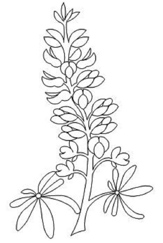 536x800 Bluebonnet Drawing How To Draw A Bluebonnet 1000 Images About