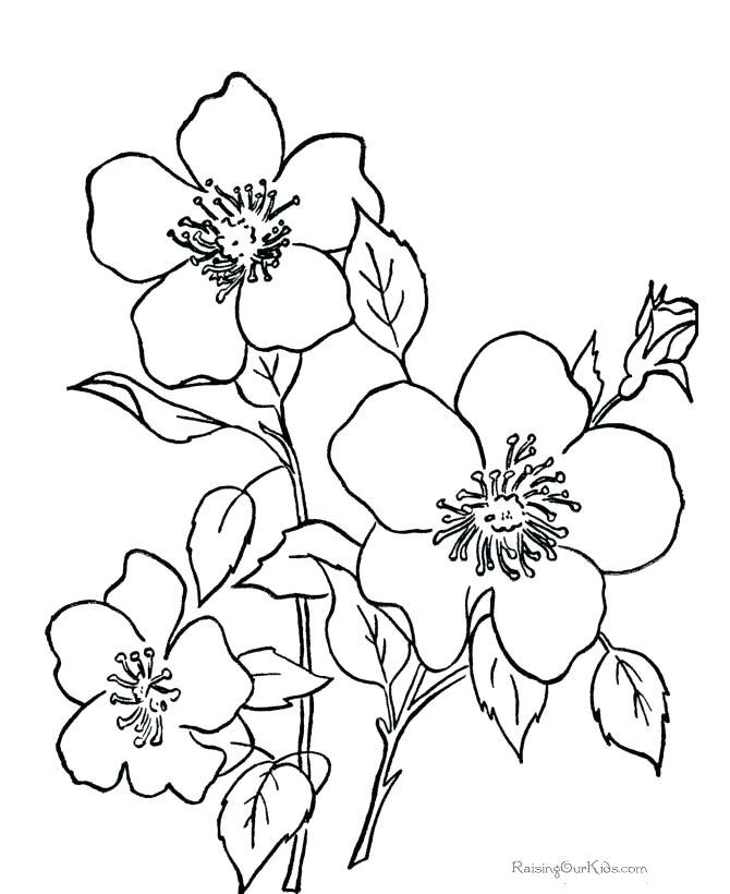 670x820 Bluebonnet Flower Coloring Page Bluebonnet Clip Art Bluebonnet