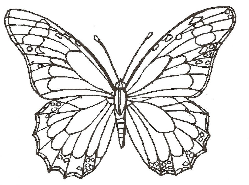974x725 Coloring Pages Pretty Drawings Of Butterfly Drawingbutterfly 5