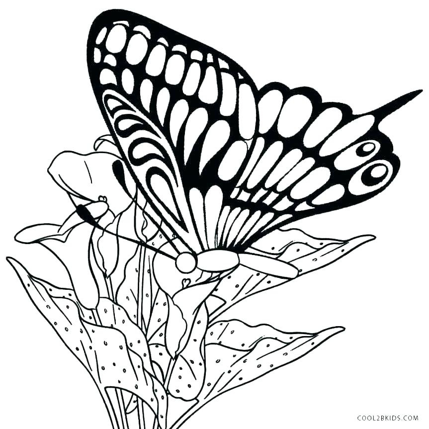 863x863 Coloring Sheet Butterfly Butterfly Coloring Pages For Toddlers