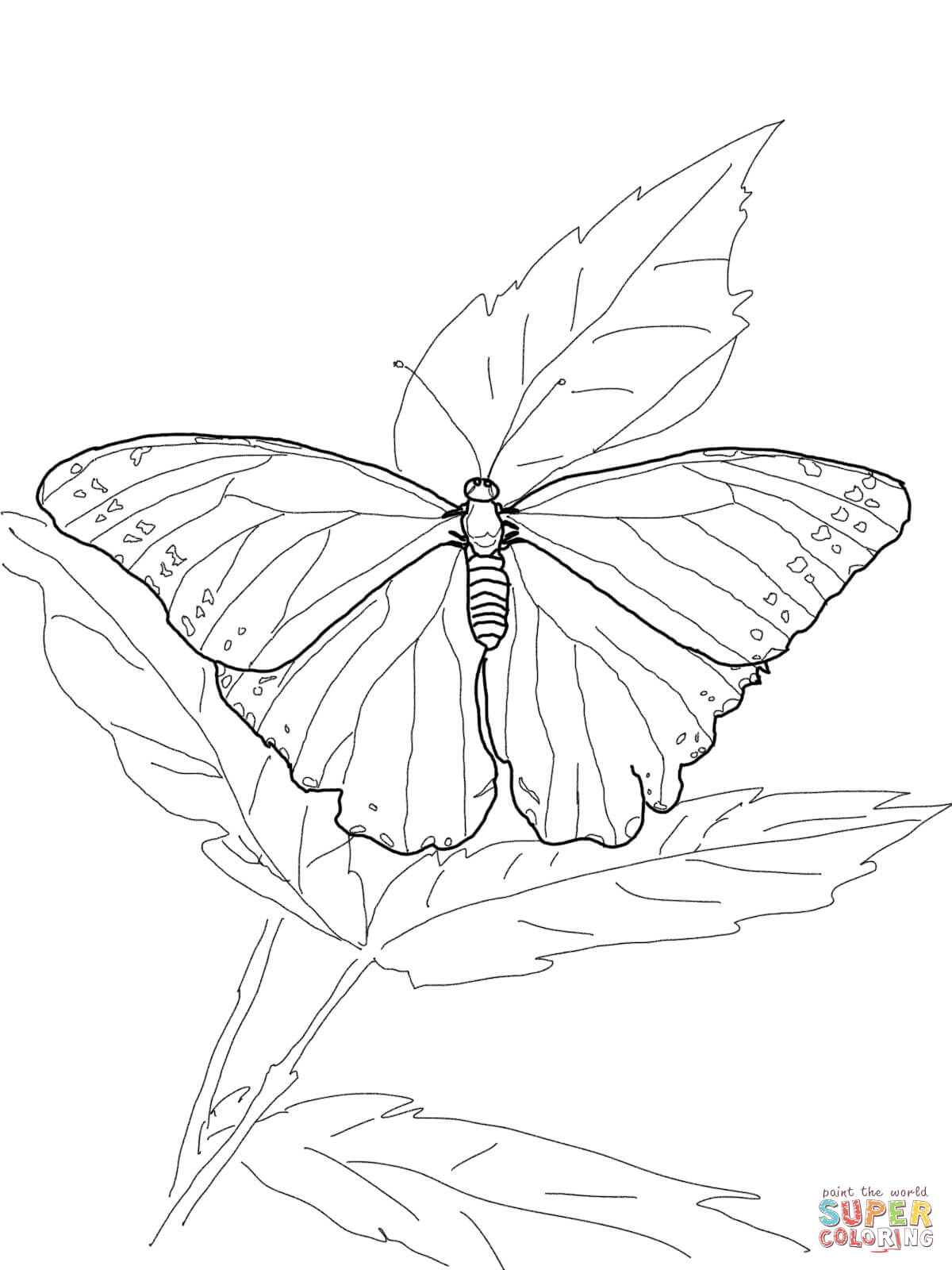 1200x1600 Blue Morpho Butterfly Coloring Page Free Printable Coloring Pages