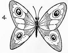 236x186 How To Draw A Butterfly On A Flower, Butterfly And Flower Step 6