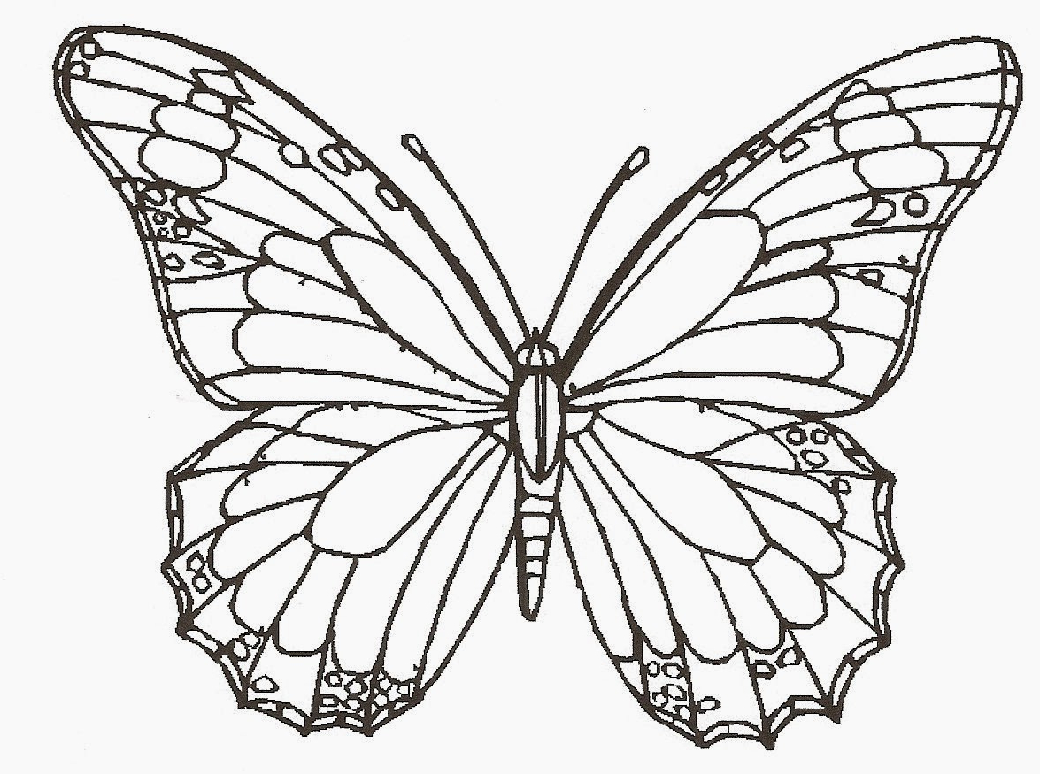 1175x875 Butterfly In Drawing In Color Blue Morpho Butterfly Drawing