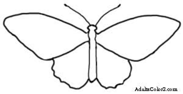 600x310 Butterfly Outline Or Silhouette Basic Butterfly Shapes