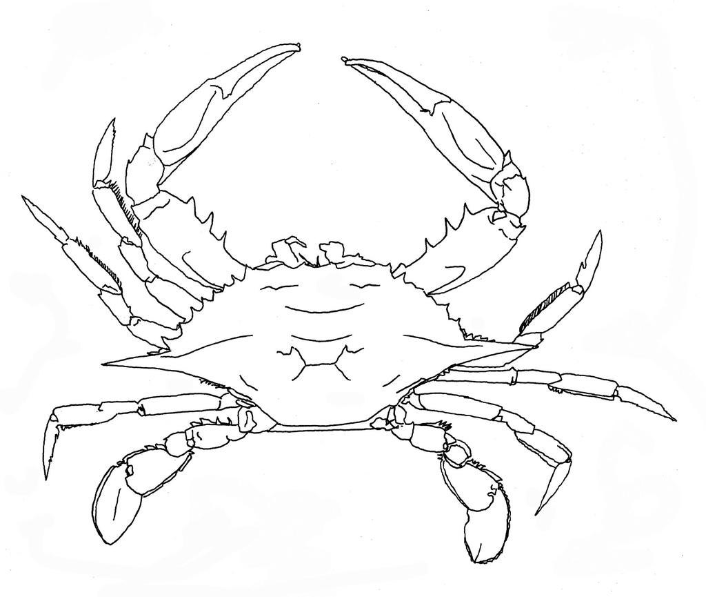 1024x865 Blue Crab Louisiana Sea Grant College Program Louisiana State