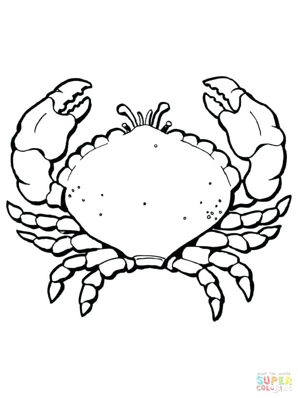 615x820 Blue Crab Coloring Pages Of Hermit Printable For Kids