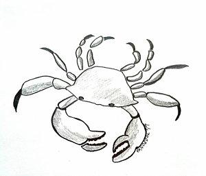 300x257 Blue Crab Drawings Fine Art America