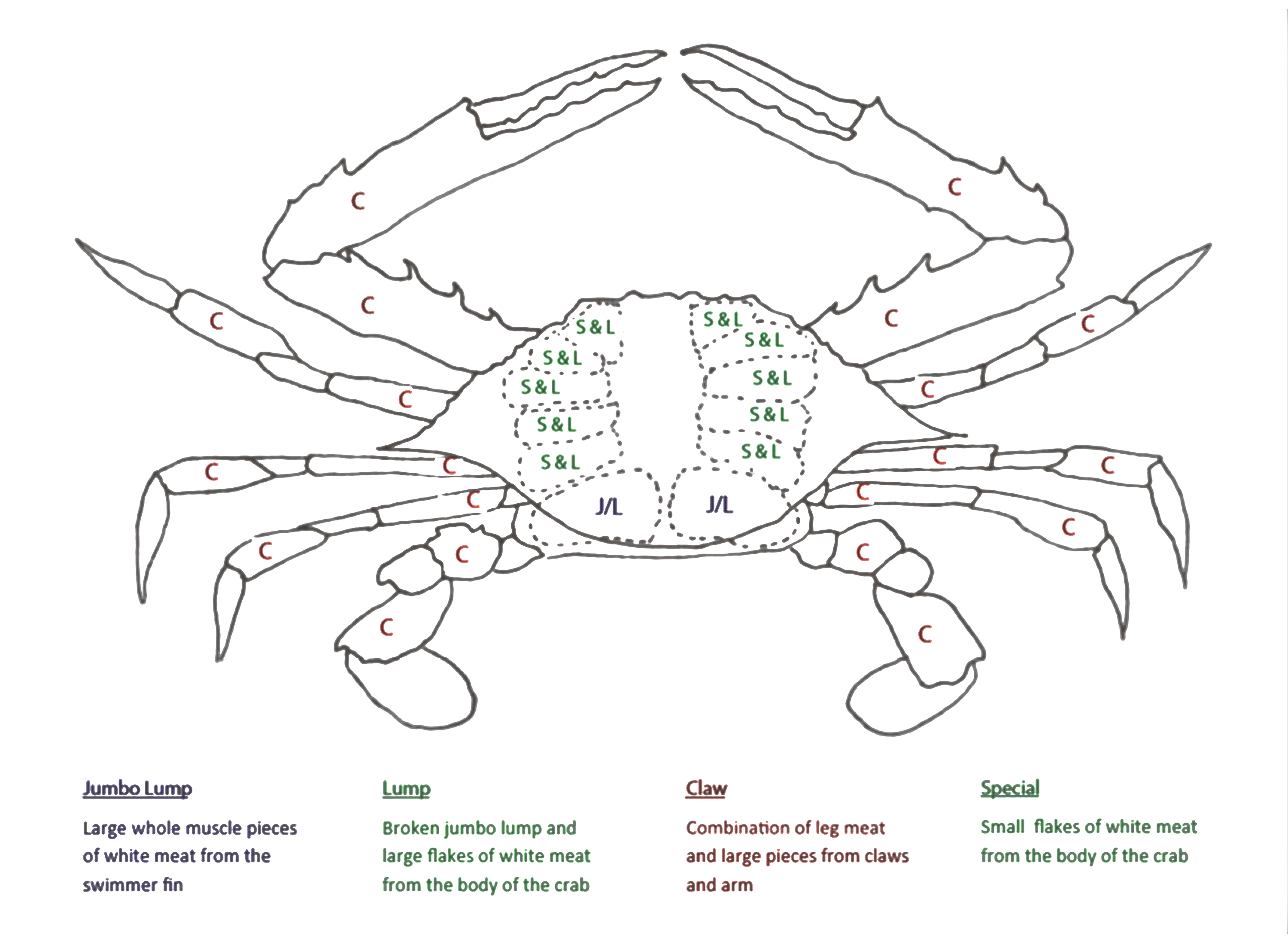 This is an image of Critical Blue Crab Drawing