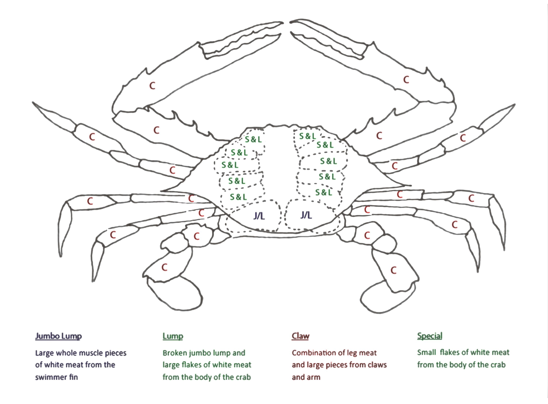 blue crab drawing at getdrawings com
