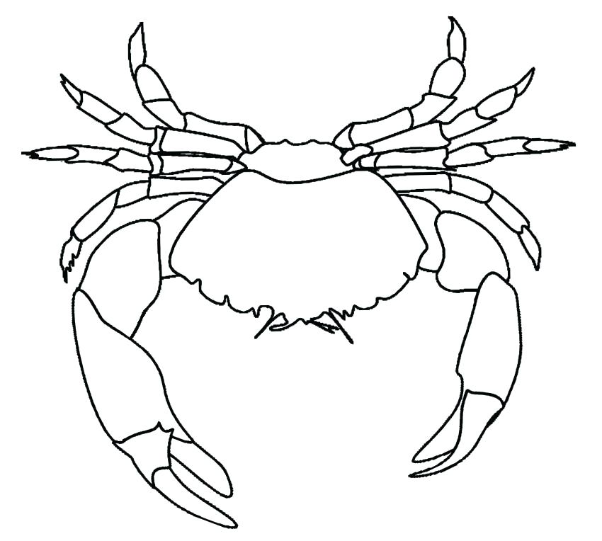 This is a picture of Dramatic Blue Crab Drawing