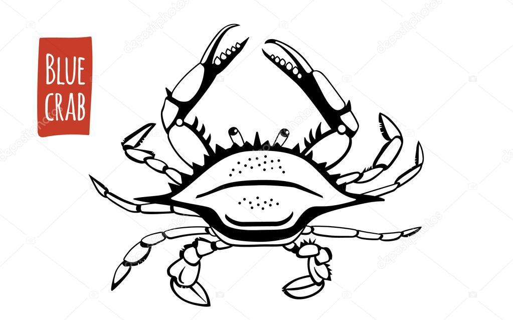 1023x638 Blue Crab, Vector Cartoon Illustration Stock Vector Ananci.art