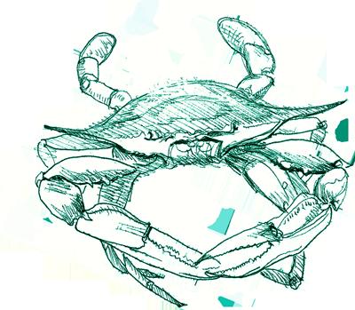 400x349 Blue Crab