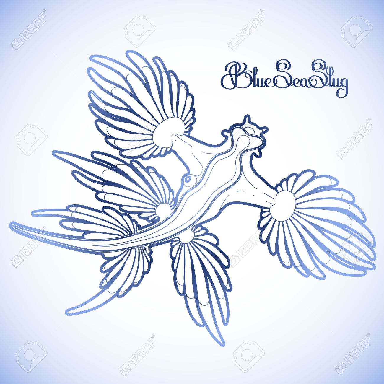 1300x1300 Glaucus Atlanticus. Blue Sea Slug Drawn In Line Art Style. Blue