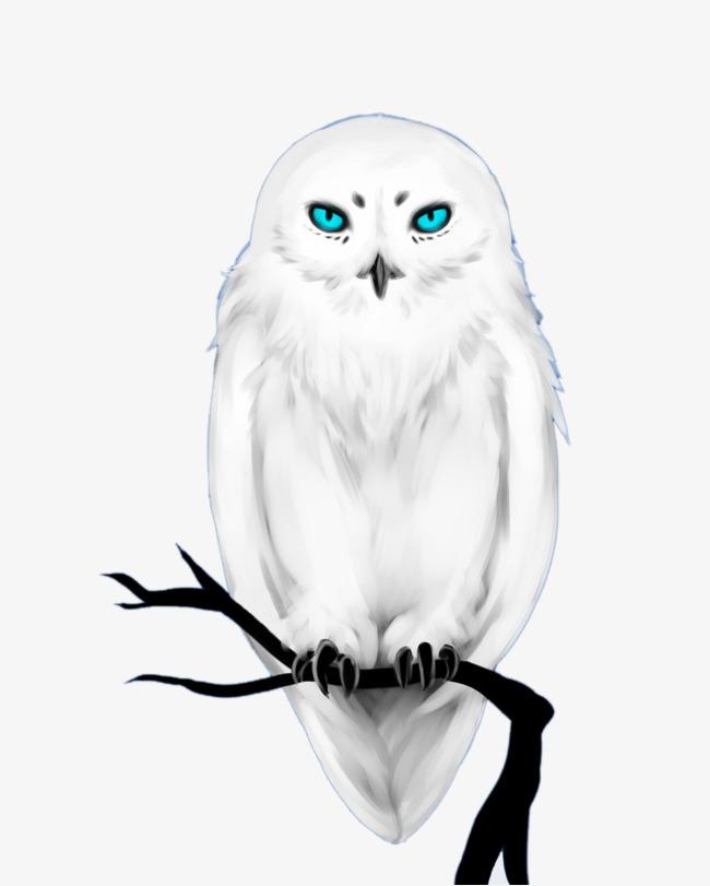 650x811 White Haired, Blue Eyed Owl, Solanum, Blue Eye, Owl Png Image