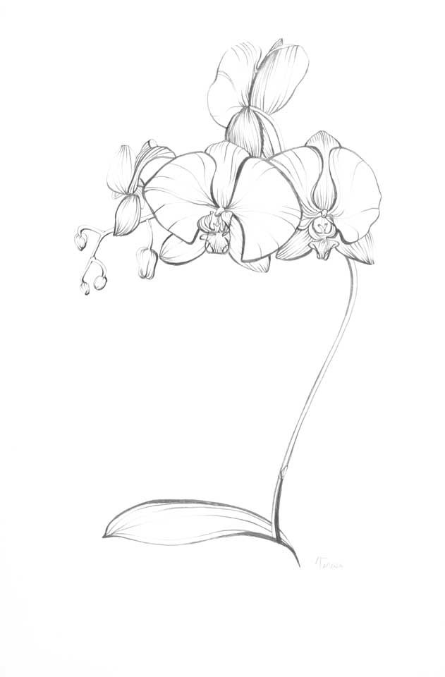 631x960 Pencil Drawings Of Orchids Blue Turtle Blue