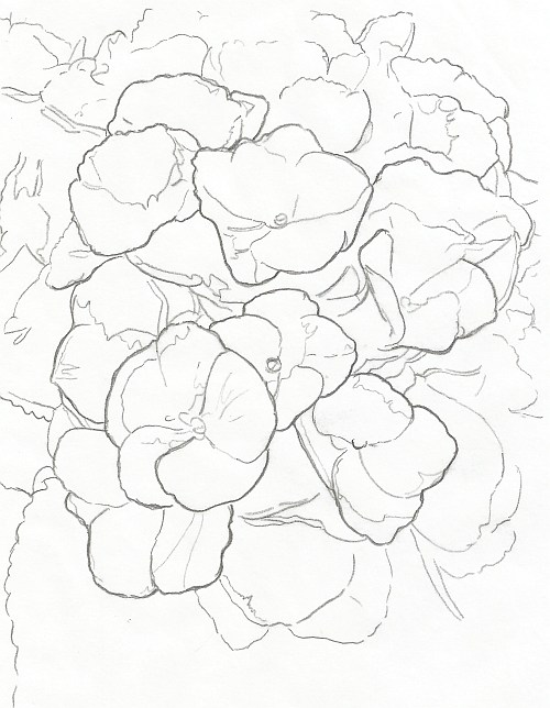 500x644 How To Draw Complex Flowers