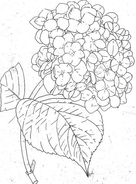 474x640 Hydrangea Line Hydrangea, Drawings And Embroidery