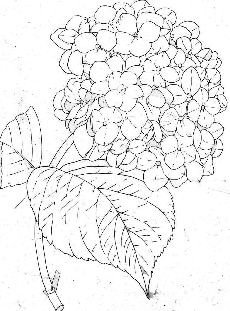 759x1024 Hydrangea Line Hydrangea, Drawings And Flowers