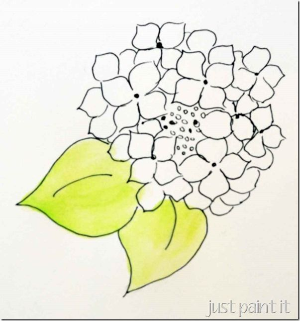 603x645 Paint Hydrangea