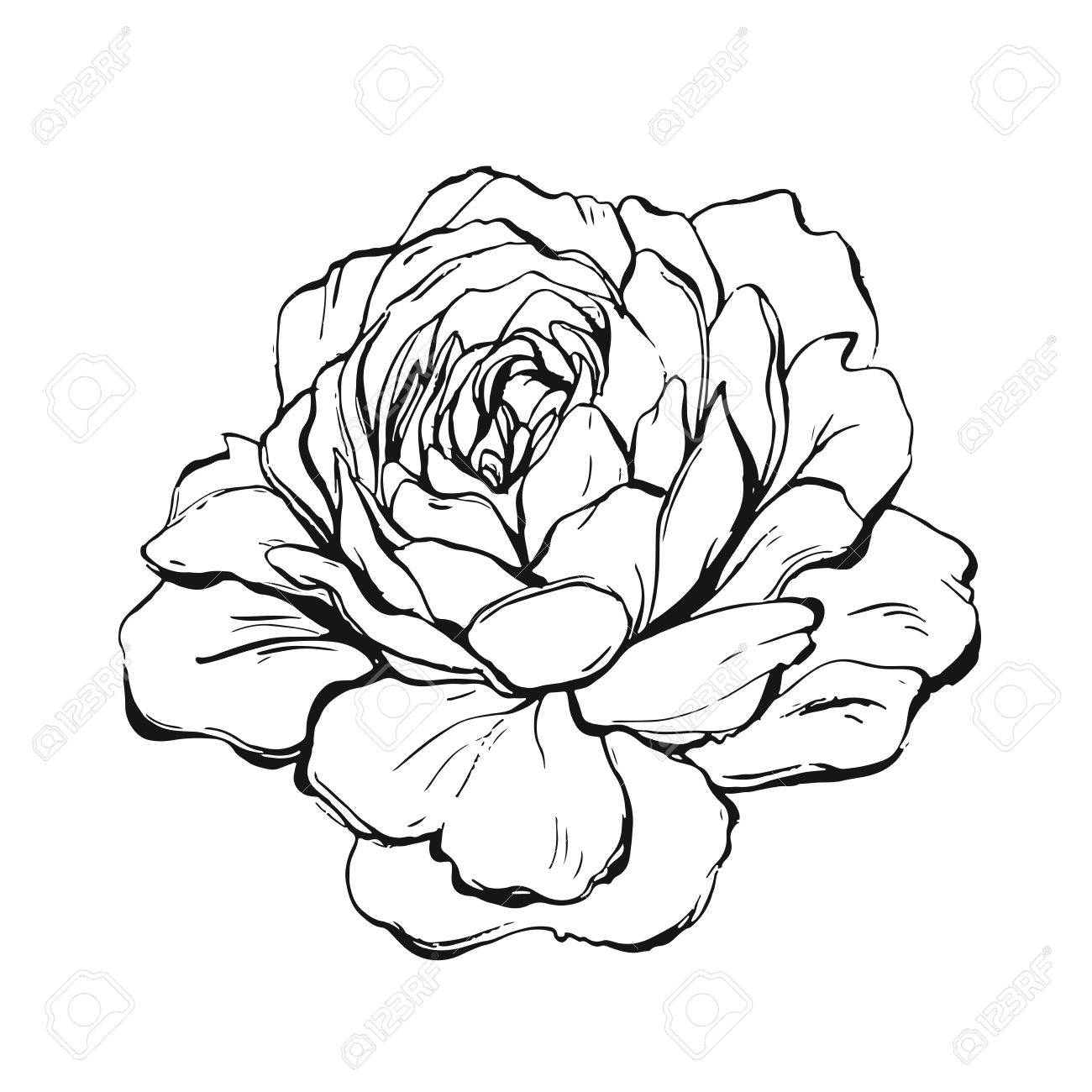 1300x1300 Ranunculus, Rose, Peony, Dahlia, Camellia, Carnation, Orchid