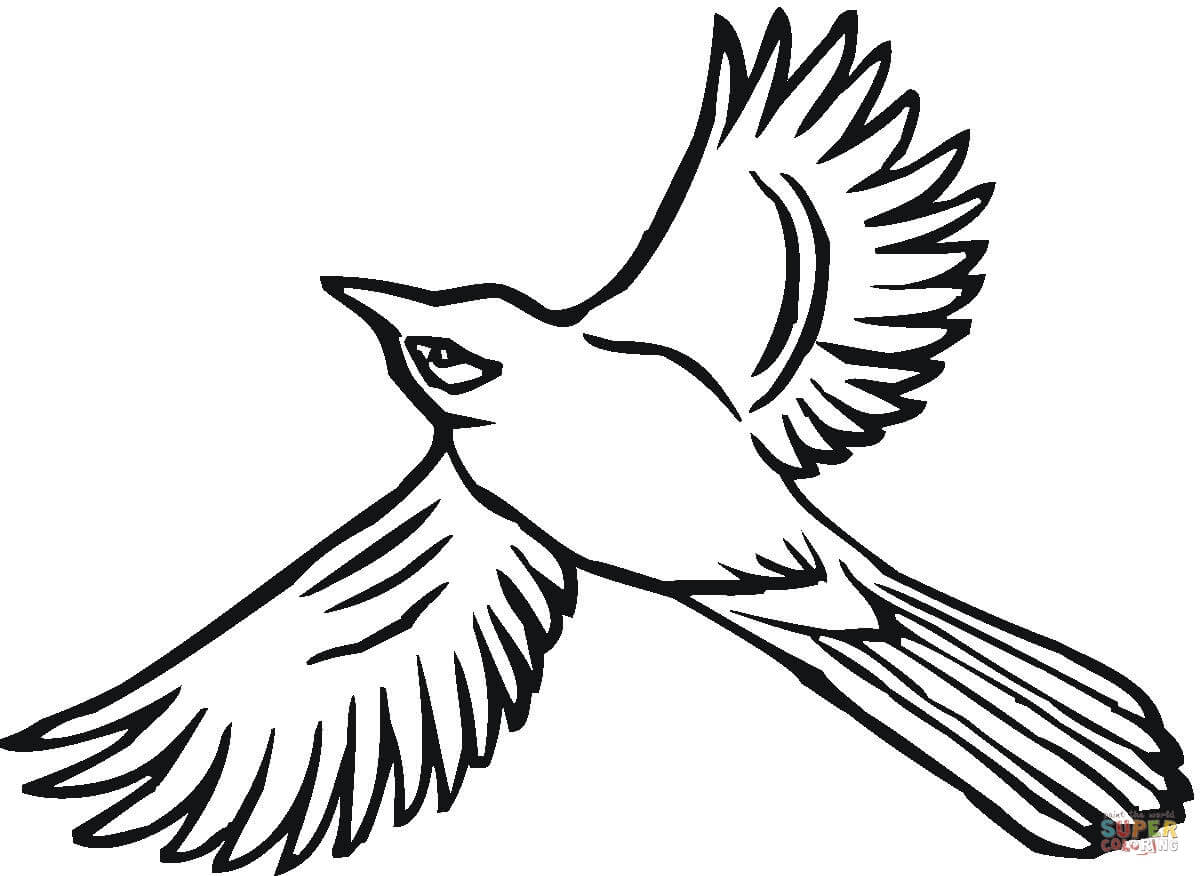 1200x876 Blue Jay Bird Coloring Page Flying Jay Coloring Page Free