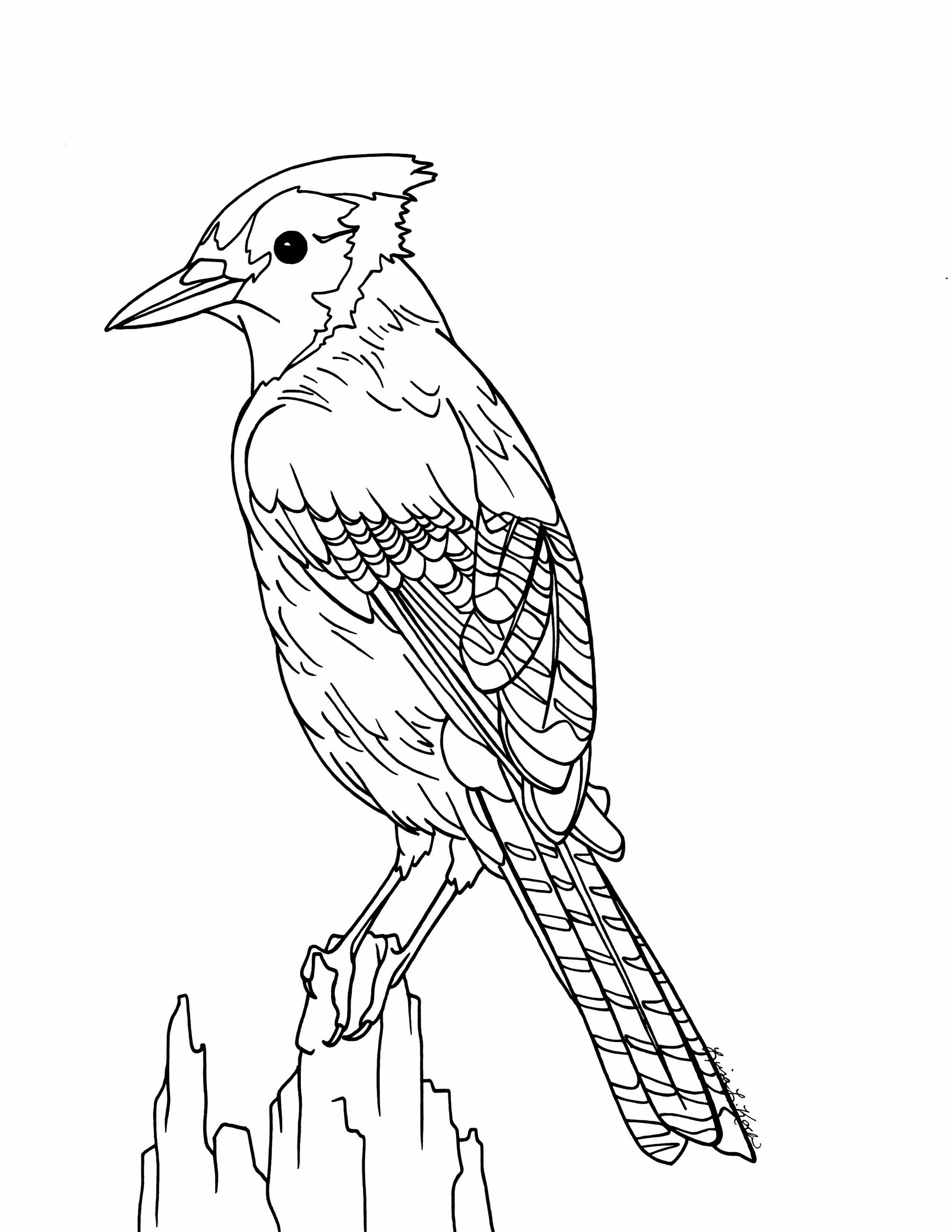 2318x3000 Blue Jay Coloring Page