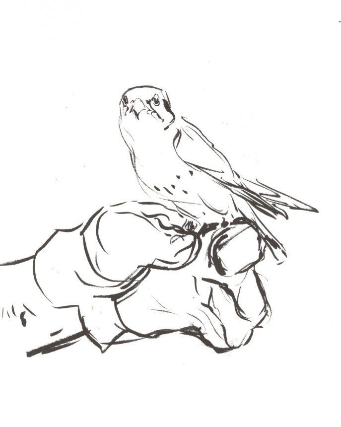 687x860 Coloring Drawing Birds Bird Drawings Charlie Harper Coloring