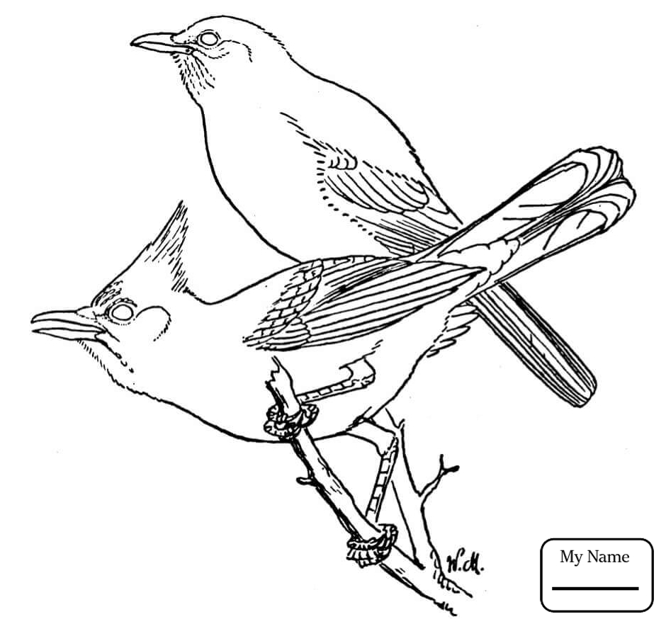 940x881 Coloring Pages For Kids Birds Jay Blue Jay On The Tree