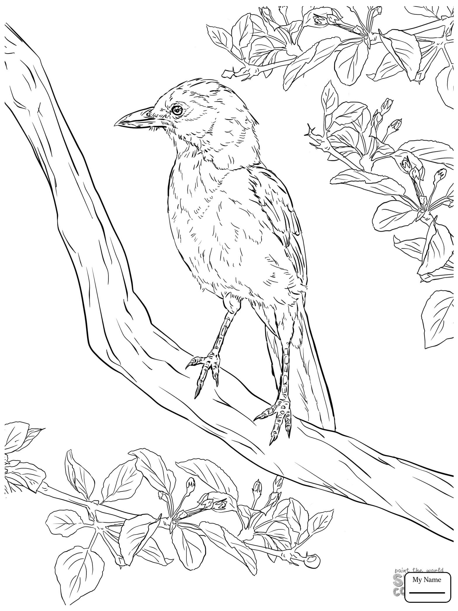 1567x2089 Cute Blue Jay Jay Birds Jay Coloring Pages For Kids