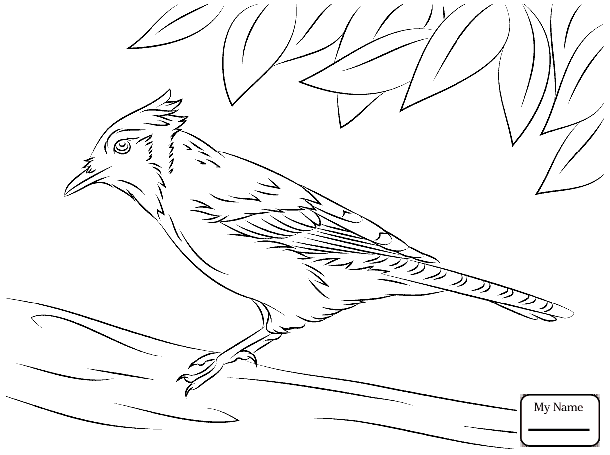 1224x913 Coloring Pages For Kids Birds Jay Blue Jay On The Tree